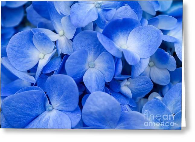 Macro Image Of Blue Hydrangea Flower Greeting Card