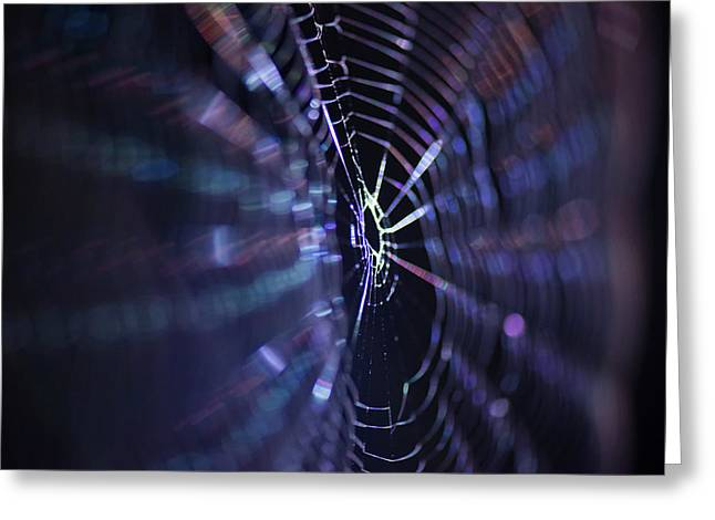 Macro Of A Spiders Web Captured At Night. Greeting Card