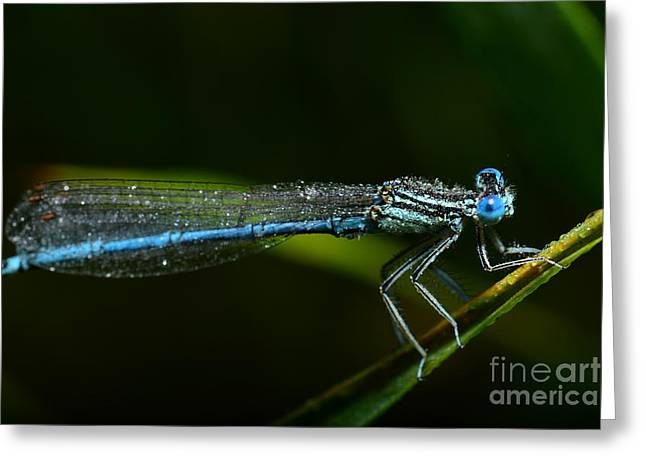 Macro Photography Dragonfly Greeting Card