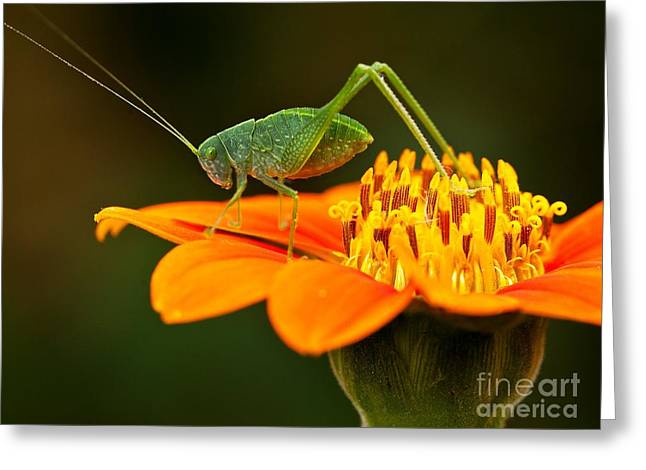 Macro Photos From Insects, Nature And Greeting Card by Dudu Linhares