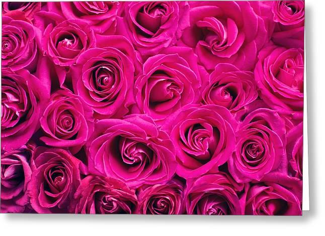 Magenta Roses Greeting Card