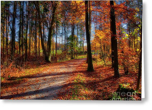 Greeting Card featuring the photograph Magic Of The Forest by Edmund Nagele