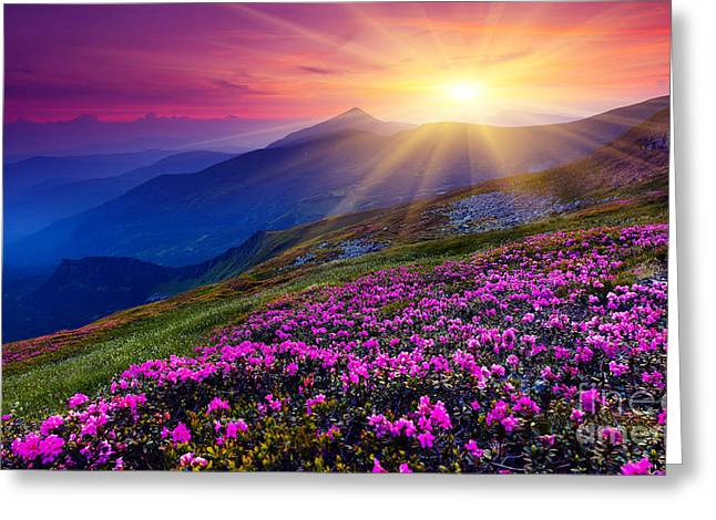 Magic Pink Rhododendron Flowers On Greeting Card