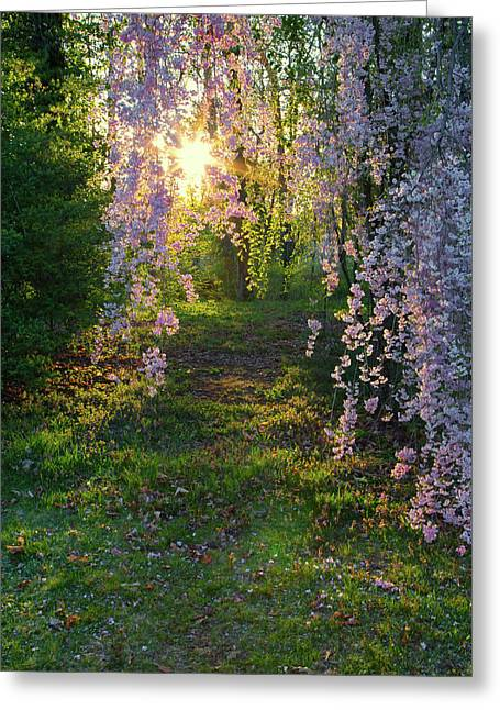 Magnolia Tree Sunset Greeting Card