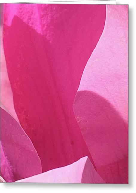 Magnolia_0350_14 Greeting Card