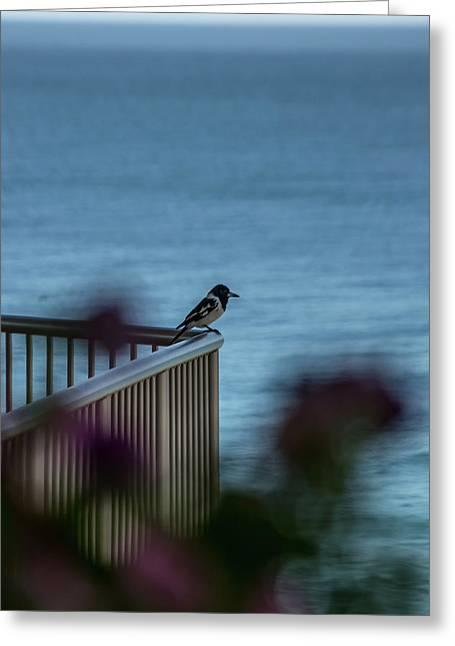 Magpie Bird Greeting Card