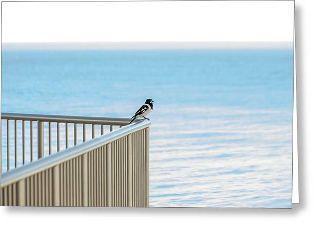 Magpie In Waiting Greeting Card