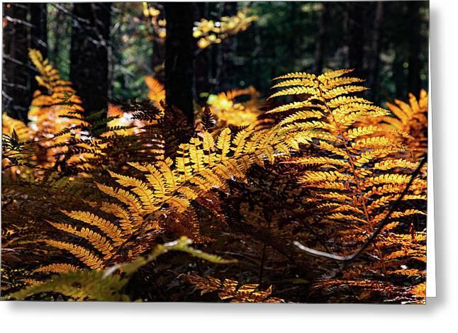 Maine Autumn Ferns Greeting Card
