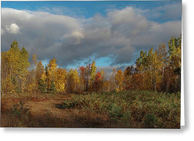 Greeting Card featuring the photograph Maine Wilderness Color 2 by Rick Hartigan