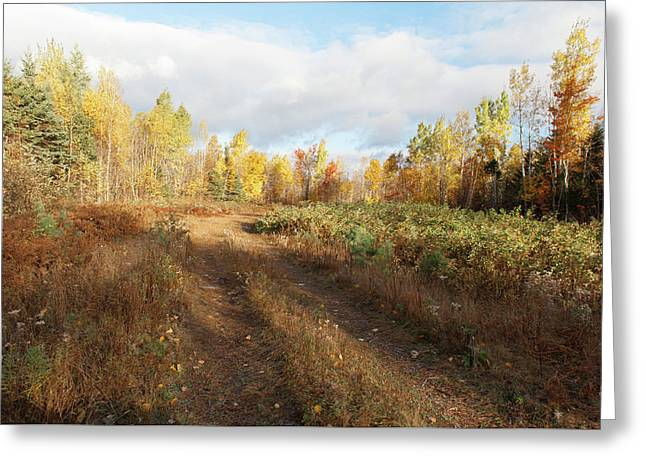 Greeting Card featuring the photograph Maine Wilderness Color by Rick Hartigan