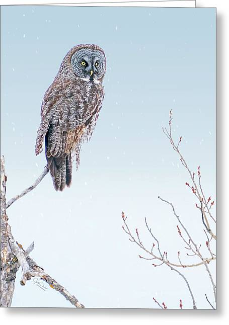 Majestic Great Gray Owl Greeting Card