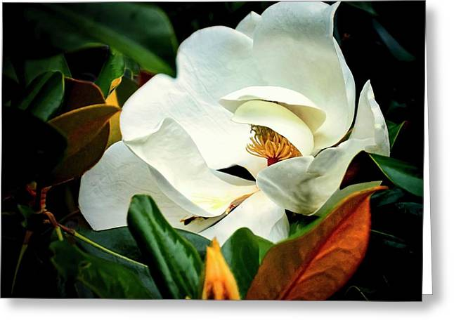 Majestic Magnolia Flower Greeting Card