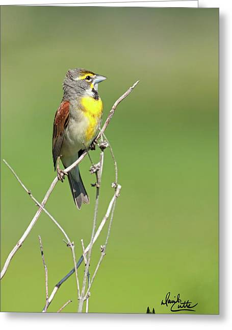 Male Dickcissel Greeting Card