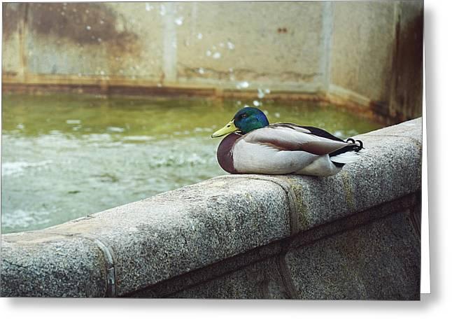 Mallard Resting On The Fountain Of The Fallen Angel In The Retiro Park - Madrid, Spain Greeting Card