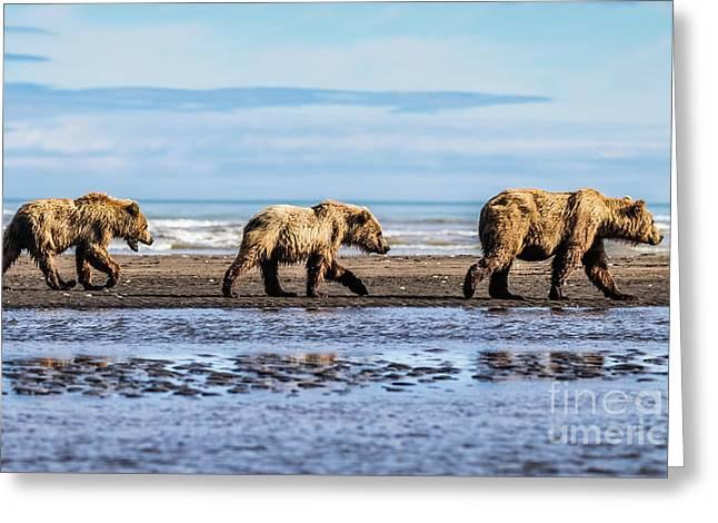 Mama Bear And Her Two Cubs On The Beach. Greeting Card
