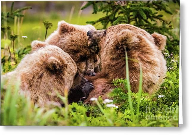 Mama Bear Nursing Her Two Cubs, Lake Clark National Park, Alaska Greeting Card