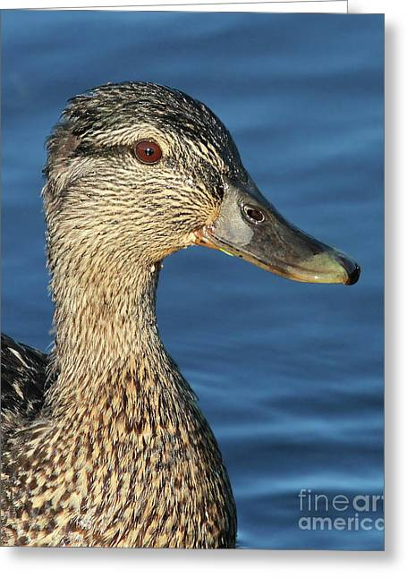 Mama Black Duck Greeting Card