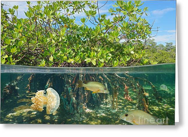 Mangrove Above And Below Water Surface Greeting Card