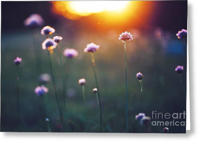 Many Beautiful Meadow Wild Flowers In Greeting Card