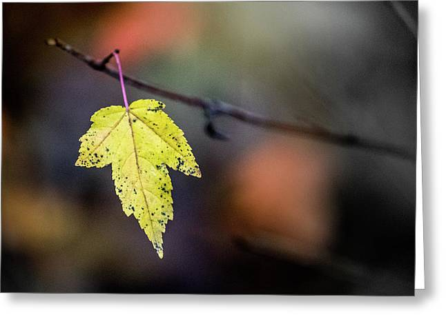 Greeting Card featuring the photograph Maple Flag by Michael Arend
