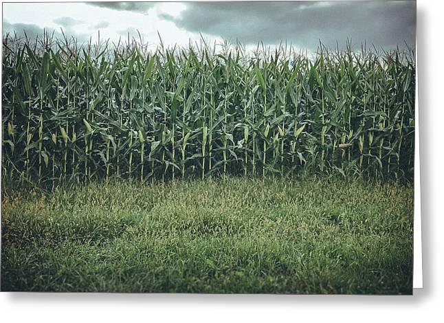 Greeting Card featuring the photograph Maze Field by Steve Stanger