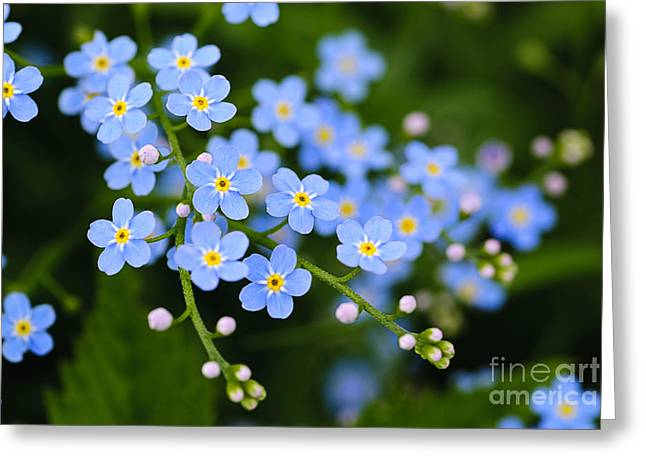 Meadow Plant Background Blue Little Greeting Card