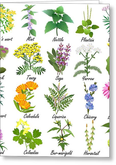 Medicinal And Healing Herbs Collection Greeting Card