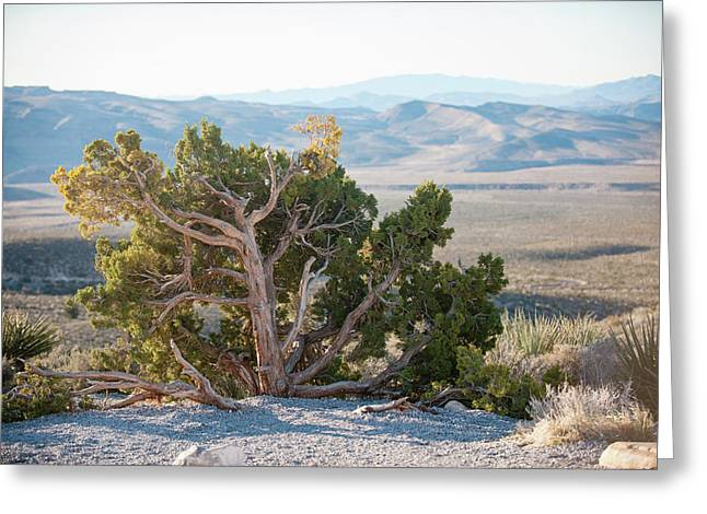 Mesquite In Nevada Desert Greeting Card