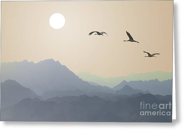 Migrating Cranes To The Sun Over The Greeting Card