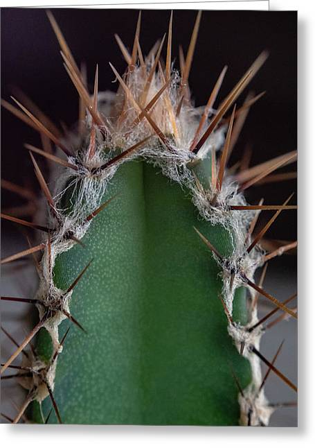 Mini Cactus Up Close Greeting Card