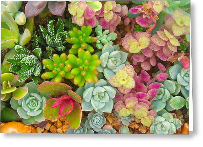 Miniature Succulent Plants Greeting Card