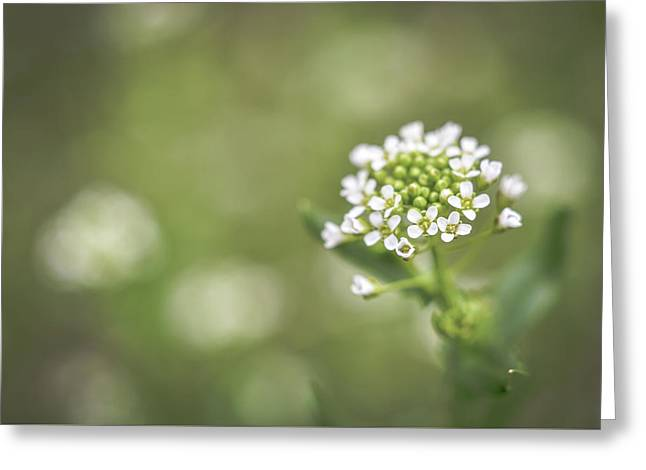 Greeting Card featuring the photograph Miss You by Michelle Wermuth