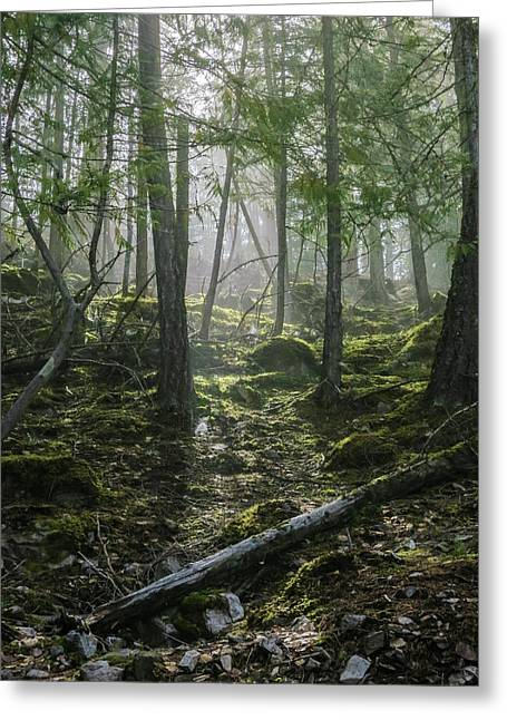 Misty Forest Morning Greeting Card