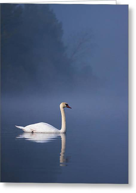 Misty River Swan 2 Greeting Card