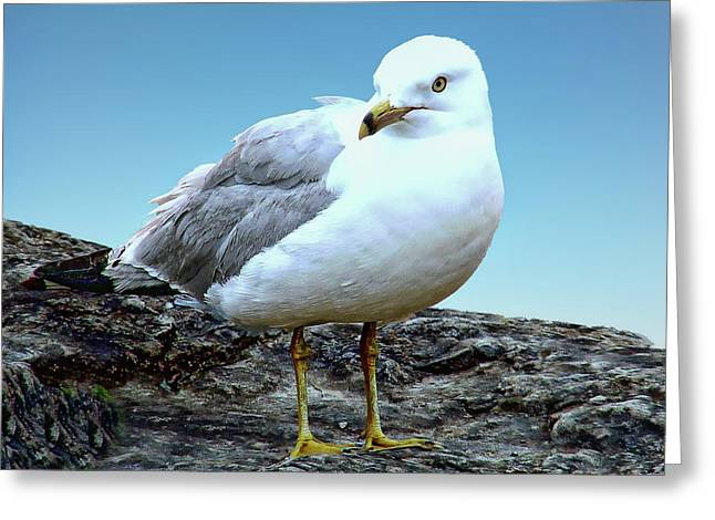 Greeting Card featuring the photograph Moewe Seagull by Anthony Dezenzio
