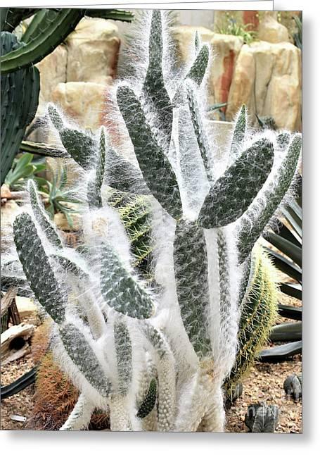 Mojave Prickly Pear Greeting Card