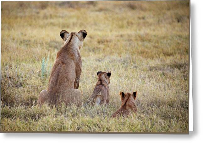 Mom And Cubs Greeting Card