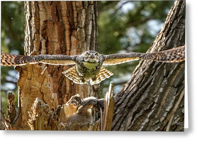 Momma Great Horned Owl Blasting Out Of The Nest Greeting Card