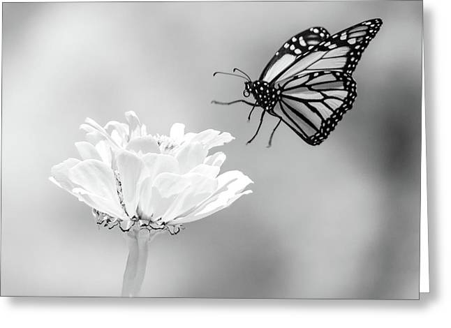 Monarch In Infrared 6 Greeting Card