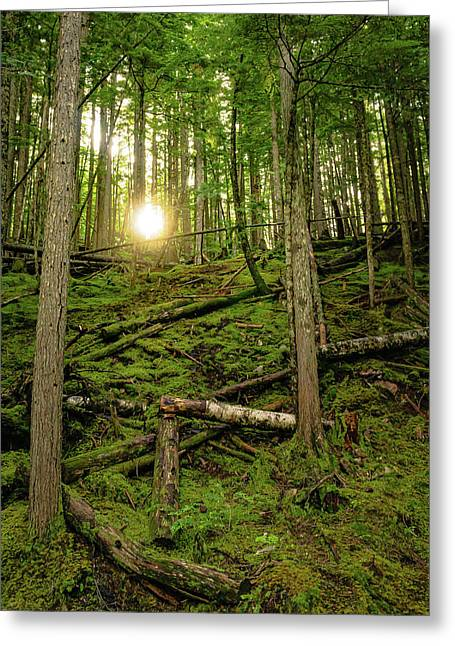 Monashee Forest Portrait Greeting Card