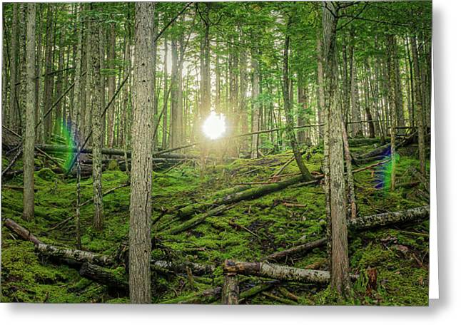Monashee Forest Sunset With Flare Greeting Card