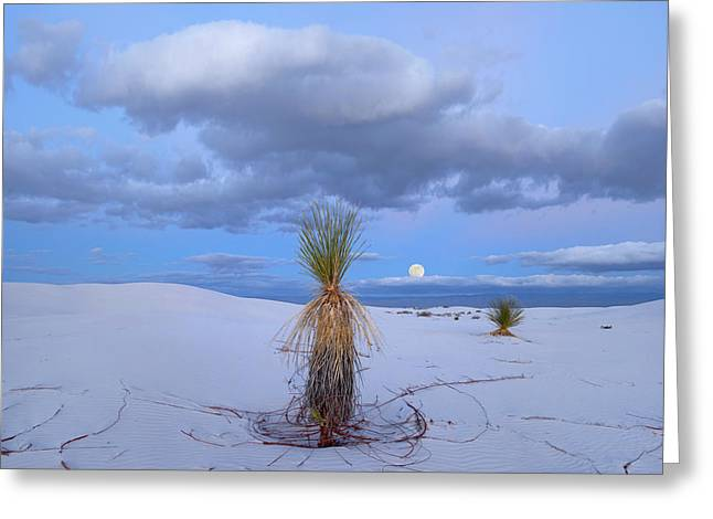 Moon And Soaptree Yucca, White Sands Greeting Card