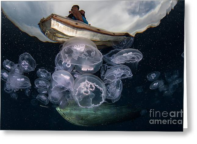 Moon Jellyfish Aurelia Aurita Aggregate Greeting Card
