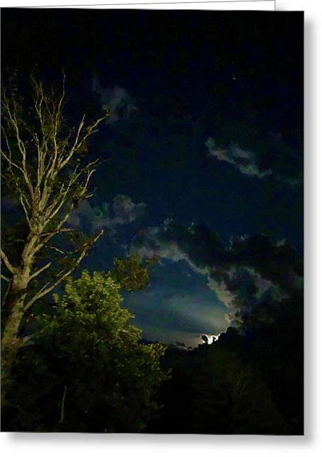Moonlight In The Trees Greeting Card