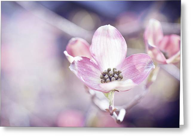 Morning Dogwood Greeting Card