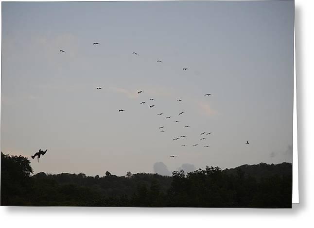 Morning Flock Rise Greeting Card