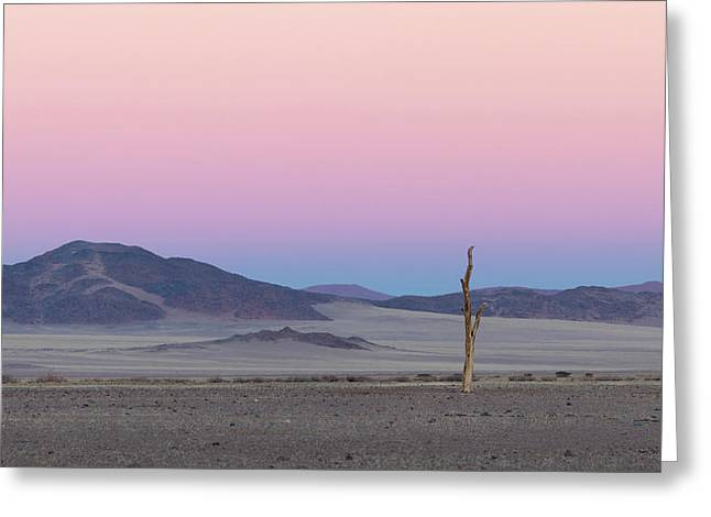 Morning In The Desert Greeting Card