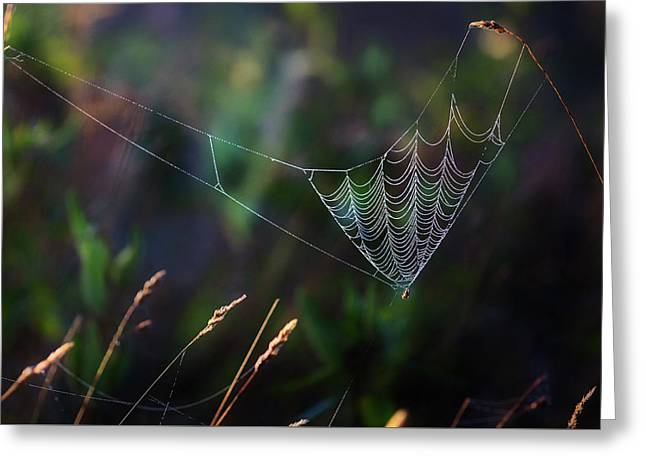 Greeting Card featuring the photograph Morning Spider by Bill Wakeley