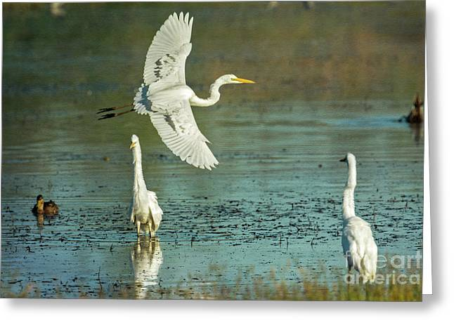 Greeting Card featuring the photograph Morning Gold by Craig Leaper