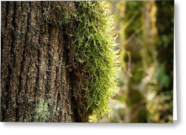Moss On Bark Greeting Card